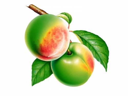 неспелые персики Овощи и фрукты - Обои для рабочего стола ...